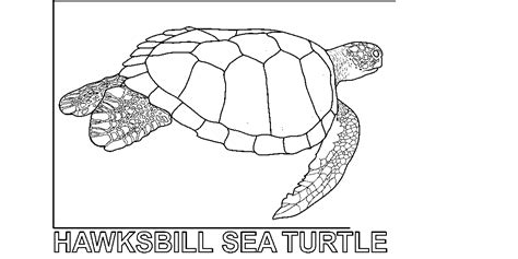 loggerhead turtle coloring page coloring pages