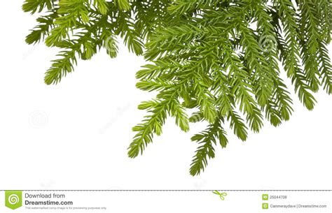 christmas tree branch background stock photo image 25044708