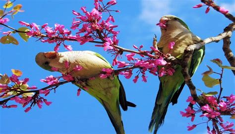 imagenes de animales naturales ranking de los mejores paisajes de animales hermosos