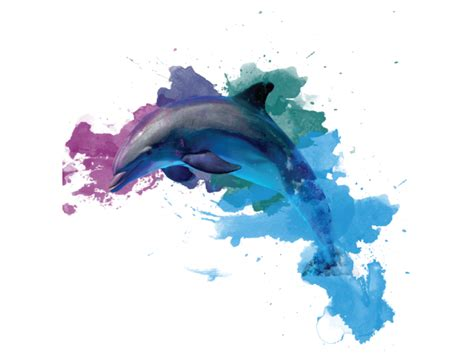colorful dolphins wall sticker colorful dolphin animals wall stickers