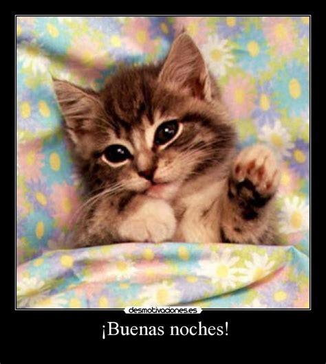 imagenes buenas noches de gatitos buenas noches con gatitos imagui