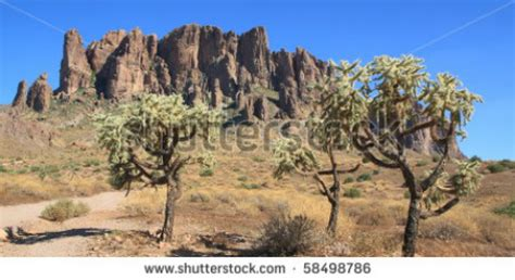 tropical desert animals and plants tropical desert biomes of the world