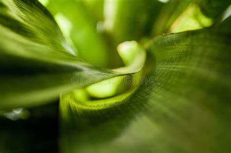 calming green calming green series royalty free stock image image