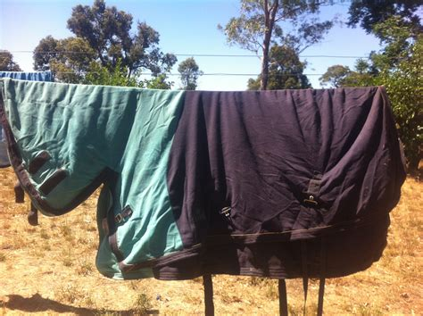 wa rug for sale 5x 5 9 rugs saddles and tack for sale wa perth