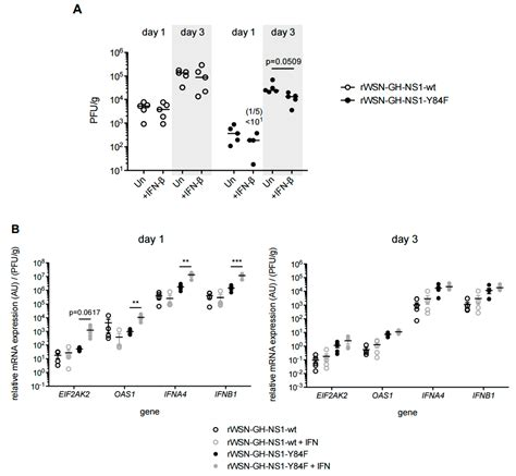 Mba Neutrophil Blood Preparation Murine Blood by Viruses Free Text A Conserved Residue Tyrosine