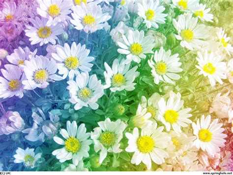 daisy wallpaper pinterest rainbow daisies wallpaper by syeramiktayee deviantart com