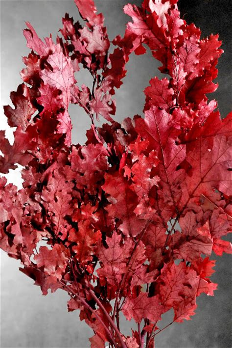 Preserved Flower Black Real Best Choice To Decorate Room preserved oak branches 22 24 in