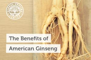Ginseng Detox Benefits by The Health Benefits Of American Ginseng Dr Eddy