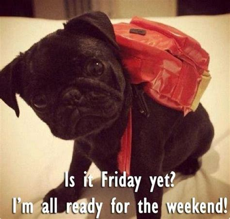 it s friday and i m ready to swing is it friday yet i m all ready for the weekend