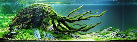 Natural Design Aquarium   best fresh water aquariums three kingdoms aquarium fish