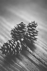 And White Free Stock Photo Of Black And White Fir Cone Pine Cone