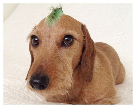 dog hair styles new haircut these 15 dogs have way cooler hairstyles than you
