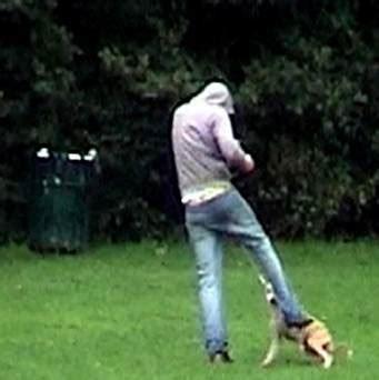 Man filmed kicking puppy in air during walk in park