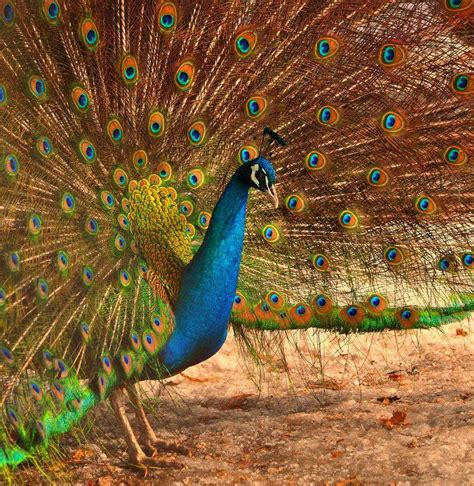amazing beautiful colorful amazing world fun beautiful colorful birds nature
