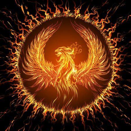 phoenix stock illustrations royalty  phoenix
