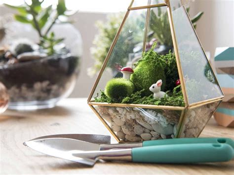 Indoors Garden by How To Make A Terrarium Realestate Com Au