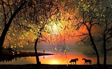 beautiful nature images horses beautiful nature photo 21888620 fanpop page 4