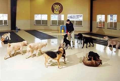 spa city puppies hotel spa indy a list