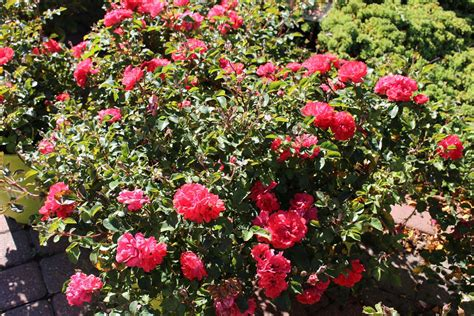 trees appleton wi shrubs and bushes for sale in appleton wi