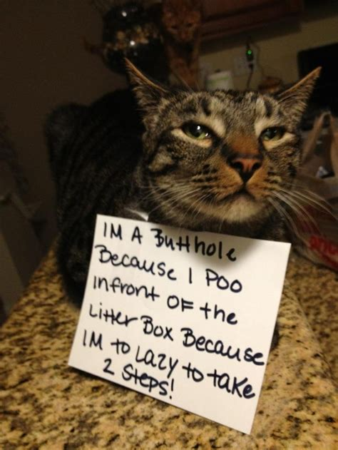 best of cat the best of quot cat shaming quot pophangover