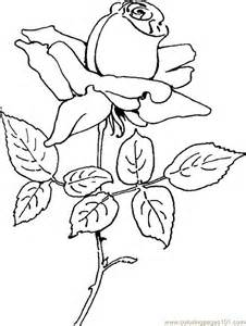Coloring Pages Rose 05 Natural World &gt Flowers  Free Printable sketch template