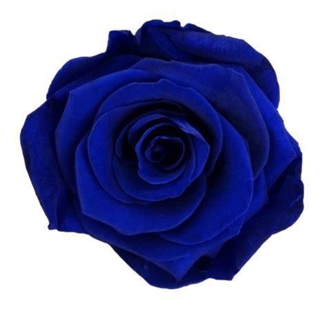 dark blue ecuamia flowers