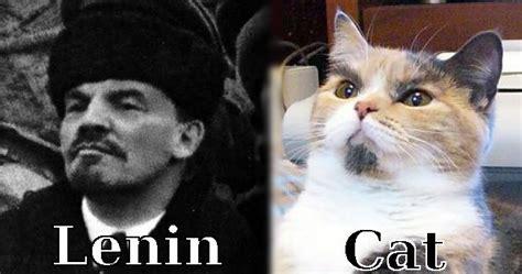 Russian Cat Meme - russian maze russian cat memes get it did com