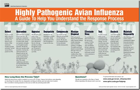 a 10 step guide to understanding and utilising pattern avian flu diary aphis what to expect if you suspect