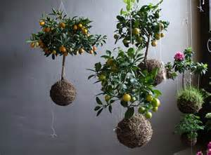 string gardens elevating hanging plants to art a blog