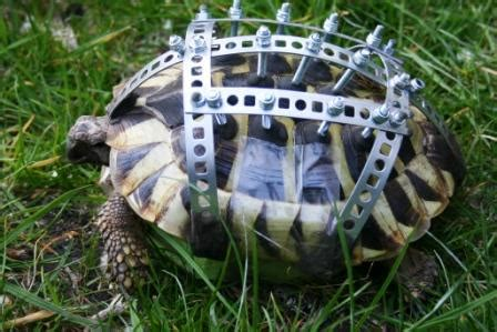 landschildkröten haltung in der wohnung kleintierhilfe e v