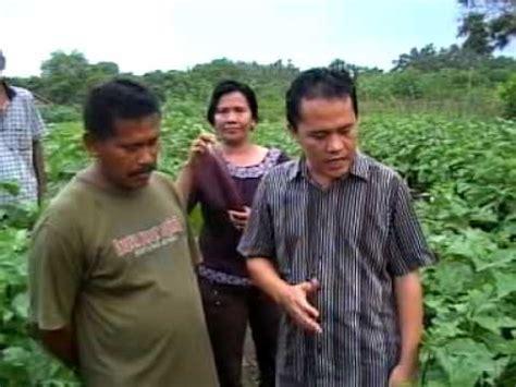 Pupuk Organik Grow More pupuk organik d i grow aplikasi di tanaman terong ungu