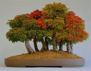 Vanity Wholesale 17 Best Ideas About Bonsai Forest On Pinterest Japanese