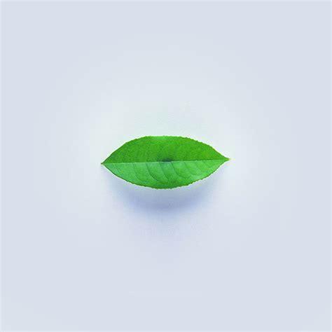 apple wallpaper leaf ah89 green leaf minimal nature art