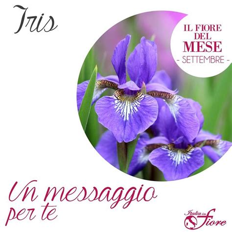 fiore iris 8 best images about iris fiore mese di settembre on
