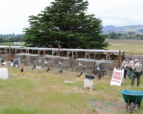 San Luis Obispo Warrant Search Authorities Seize 18 Roosters From Suspected Cockfighting Operation Paso Robles