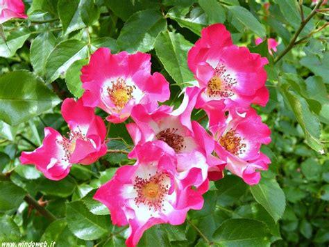 foto fiori fiori foto