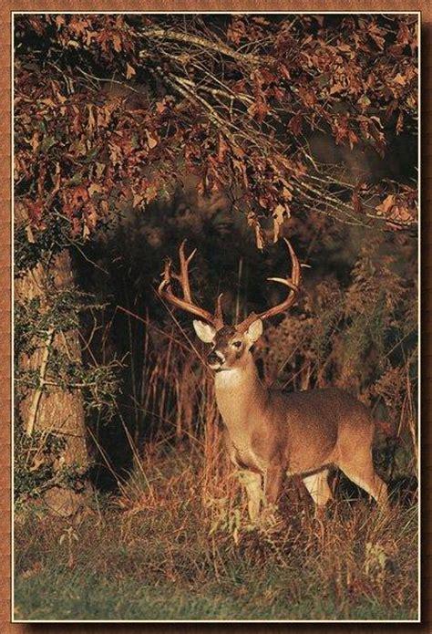 horse prints in home d 233 cor trendsurvivor free deer wallpaper best images collections hd for