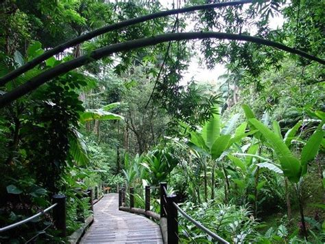 Hilo Botanical Garden Tropical Botanical Gardens Hilo Big Island Hawaii Pinterest