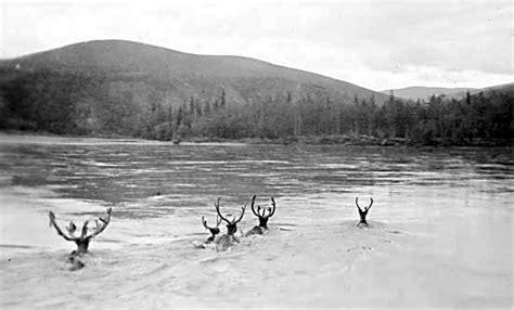 is north river boats still in business 1945 yukon nuggets yukon history