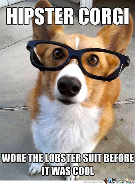 Corgi Meme - the 25 best ideas about corgi meme on pinterest funny