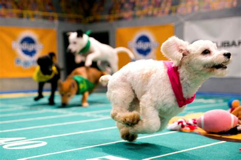 puppy bowl score puppy bowl adoptions special needs pups how to and photos indiewire