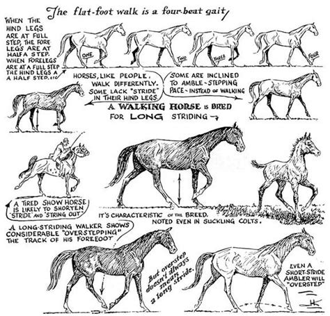 explaining frost patterns contamination speed of 1000 images about horse breeds on pinterest icelandic