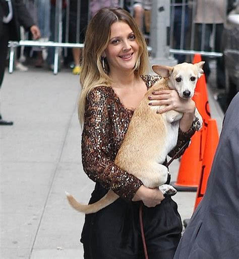 Drew Barrymore Supports Pet Adoption by 15 With Their Rescue Dogs And Fur