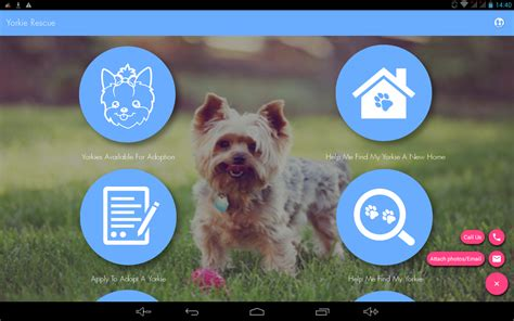 yorkie rescue sa sa yorkie rescue android apps on play