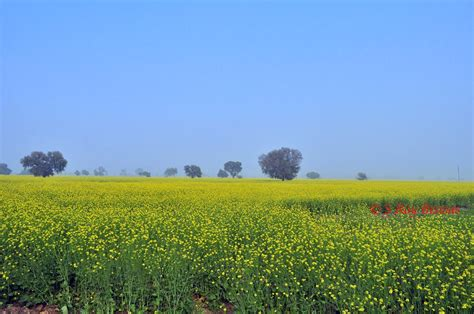 Any Approaching Enemy s roy biswas destinations in rajasthan visiting deeg