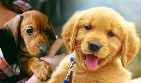 cute puppy pictures  science    puppies  adorable nature news