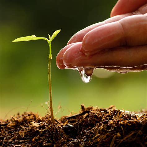 Watering Garden by The Ultimate Sheet For Watering House Plants
