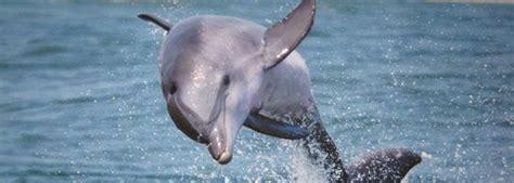 virginia aquarium dolphin watching boat trips 27 best teambuilding ideas images on pinterest virginia
