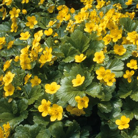 Langsam Wachsende Thuja 3388 by Langsam Wachsende Pflanzen Schnell Wachsende