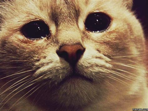 Crying Cat Meme - crying cat memes com